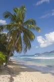 Configuration tropicale Image libre de droits