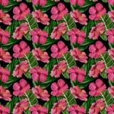 Configuration tropicale sans joint Illustration d'aquarelle photo libre de droits