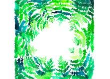 Configuration verte de fougère Photos libres de droits