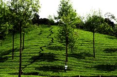 Configuration verte de jardin de lame (mer images libres de droits