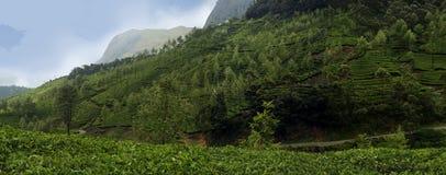 Configuration verte de jardin de lame (mer photo libre de droits