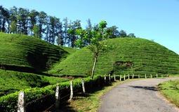 Configuration verte de jardin de lame (mer Photo stock
