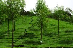 Configuration verte de jardin de lame (mer images stock