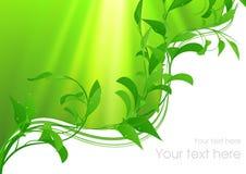 Configuration verte de lame Photographie stock