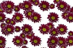 Configurations de fleurs Photographie stock
