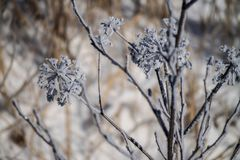 Configurations de l'hiver photo stock