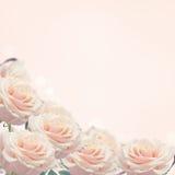 Confine dalle rose del rfesh Fotografia Stock