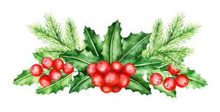 Confine dei brunch del pino e di Holly Berry Illustrazione dell'acquerello Fotografia Stock Libera da Diritti
