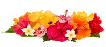 Confine dei fiori variopinti dell'ibisco Immagini Stock Libere da Diritti