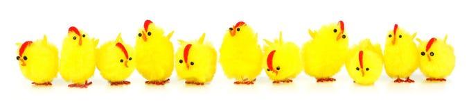 Confine dei pulcini di Pasqua Fotografia Stock