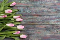 Confine dei tulipani rosa freschi della molla Fotografia Stock
