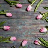 Confine dei tulipani rosa freschi della molla Fotografie Stock