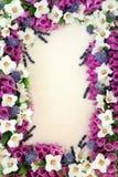 Confine del fiore e dell'erba Immagine Stock
