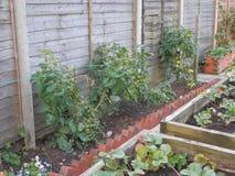 Confine del giardino della verdura e della frutta Immagini Stock