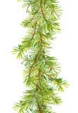 Confine dell'albero di Natale - rami dell'abete Striscia della struttura dell'acquerello Fotografia Stock