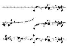Confine dell'edera con filo spinato Fotografia Stock