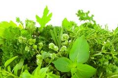 Confine delle erbe fresche differenti della spezia sopra fondo bianco Fotografia Stock
