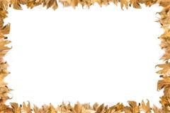 Confine delle foglie Immagine Stock