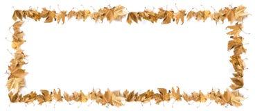 Confine delle foglie Fotografie Stock