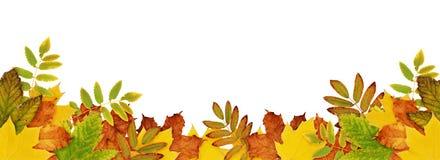 Confine di autunno con le foglie secche in colo giallo, arancio e verde Immagine Stock Libera da Diritti