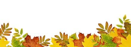 Confine di autunno con le foglie secche in colo giallo, arancio e verde Fotografia Stock