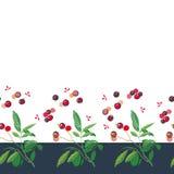Confine di Natale con la pianta ed i germogli rosa illustrazione vettoriale