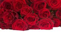Confine di rosso fresco   mucchio delle rose Fotografia Stock