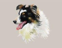 Confine el ejemplo de la acuarela del perro de Collie Animal en el vector blanco del fondo Fotografía de archivo libre de regalías