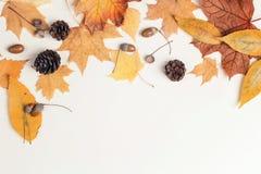 Confine fatto delle foglie di autunno, dei coni e delle ghiande secchi sulle sedere leggere Immagini Stock