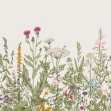 Confine floreale senza cuciture di vettore illustrazione vettoriale