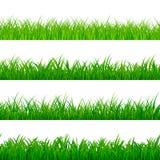 Confine gorisontal senza cuciture dell'erba Modello di erbe verde di panorama Elementi di struttura dell'erba Illustrazione di ve illustrazione vettoriale