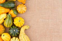 Confine laterale delle zucche ornamentali di autunno Immagine Stock