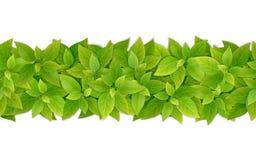 Confine senza cuciture di vettore con le foglie verdi Fotografia Stock