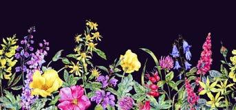 Confine senza cuciture floreale medicinale di estate dell'acquerello, pianta dei fiori selvaggi royalty illustrazione gratis