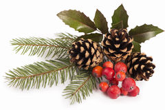 Confine stagionale di Natale di agrifoglio, vischio, Fotografia Stock Libera da Diritti