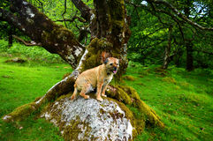 Confine Terrier Fotografie Stock Libere da Diritti