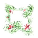Confine tropicale delle foglie di palma con i fiori rosa Fogliame esotico dell'albero fatto nello stile dell'acquerello con il po Fotografie Stock
