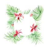 Confine tropicale delle foglie di palma del cerchio con i fiori rosa Fogliame esotico dell'albero fatto nello stile dell'acquerel Immagini Stock