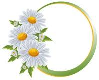 Confini del fiore. Camomilla del mazzo isolata. Fotografie Stock