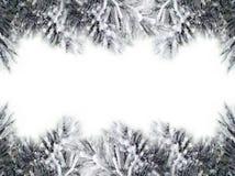 Confini dell'albero di Natale Immagini Stock Libere da Diritti