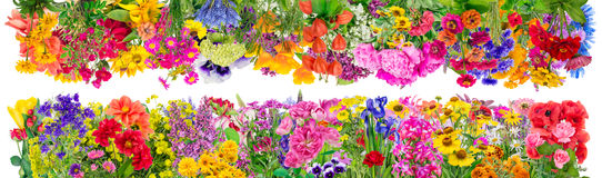 Confini floreali fantastici Fotografia Stock
