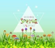 Confini grafici del fiore della primavera variopinta Fotografia Stock Libera da Diritti