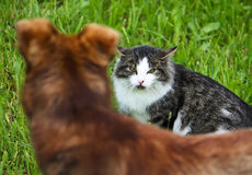 Conflit de chat et de chien Photos libres de droits
