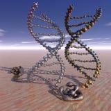 Conflito dos genes Fotos de Stock Royalty Free