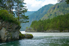 The confluence of mountain rivers, Mountain Altai Royalty Free Stock Images