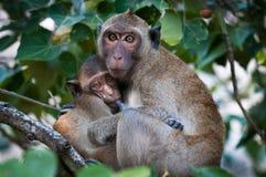 Confort dans la jungle Photo libre de droits
