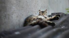 Confort de chat sur le toit photos libres de droits