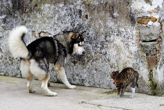 Confrontation between cats and dogs,. Eastphoto, tukuchina,  Confrontation between cats and dogs Stock Photos