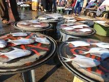 Confronto di dimensione del pesce Fotografia Stock Libera da Diritti