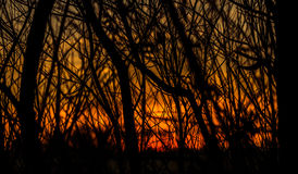 Confused деревья на заходе солнца Стоковые Изображения